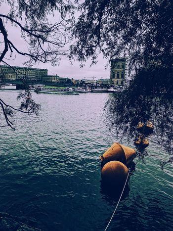 EyeEm Selects Water Tree Nautical Vessel