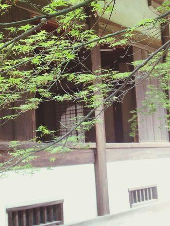 Zen Shrine I heard sutra-recitation Calm