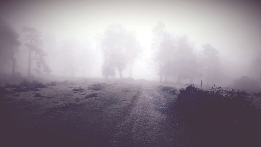 Let the dream begin, let your darker side give in Fog Nature Forest Tree Landscape No People Beauty In Nature Scenics Outdoors Spooky The Week On EyeEm Tranquility Darkness Desire