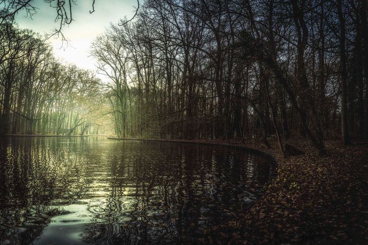 Day Forest Grass Lake Landscape Mist Morning Mystery Nature No People Outdoors Park Reflection Tree Trees Twilight Water