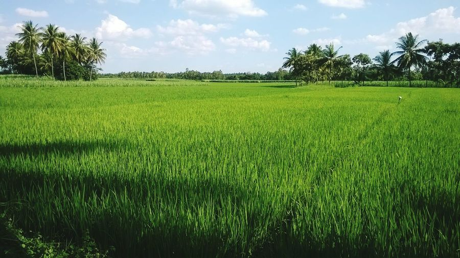 Agriculture Outdoors