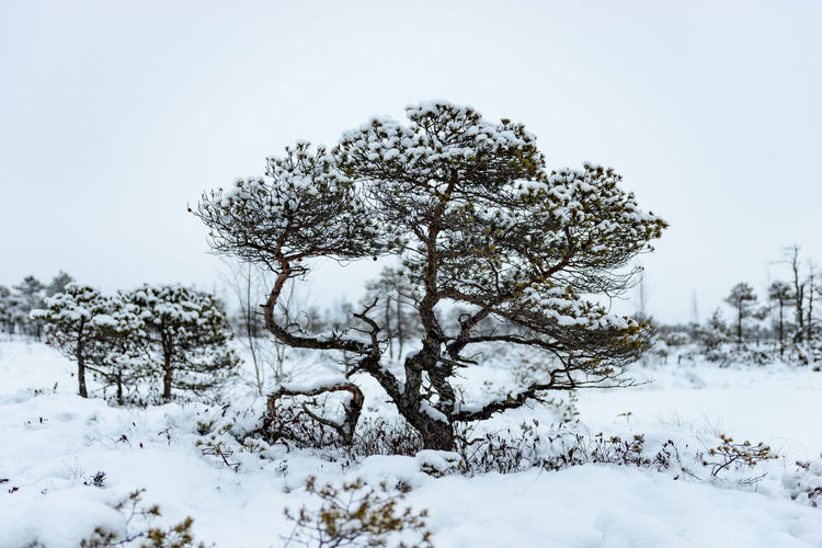 Tree on snow covered landscape against clear sky