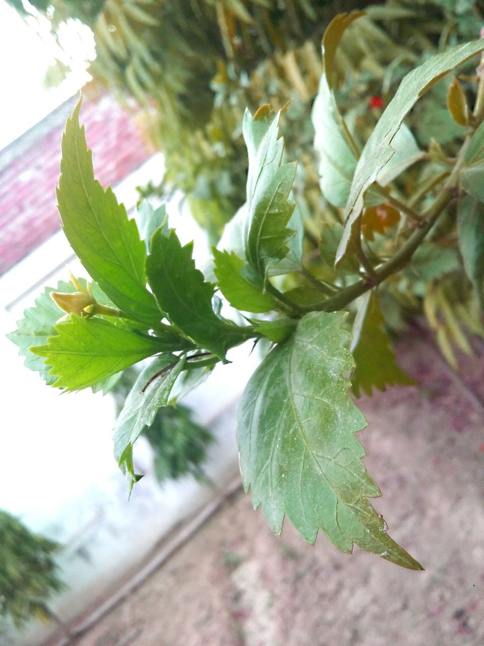 leaf, green color, growth, plant, nature, no people, close-up, day, outdoors, freshness, tree, beauty in nature