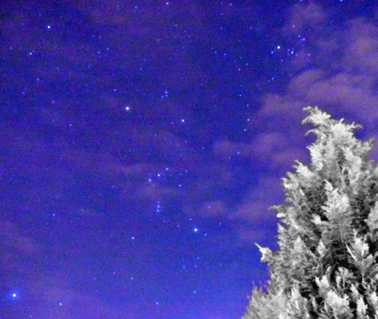 Look up in the night sky, it have more history then us humans. Asteroids Atmosphere Clouds And Sky Comets Edited Photography Milkyway Milkywaygalaxy Night Night Time Night View No Gravity  Orion Orion Nebula Orions Belt Space Star Sign Stars Tree Universe