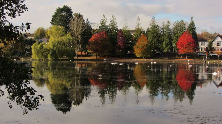 Roath park lake Cardiff Water Reflection Multi Colored Park Tranquil Scene Nature Colorful Lake Wales Roath Park Roath Roathlake Tree Beauty In Nature Tranquility In Bloom Scenics