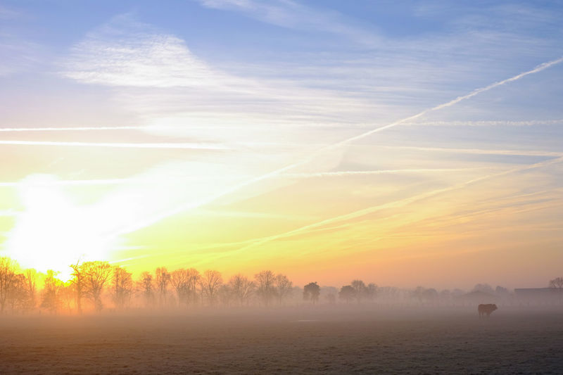 Countryside winter sunrise landscape Beauty In Nature Cloud - Sky Environment Field Fog Hazy  Idyllic Landscape Morning Nature No People Non-urban Scene Outdoors Plant Scenics - Nature Sky Sunset Tranquil Scene Tranquility Tree Vapor Trail