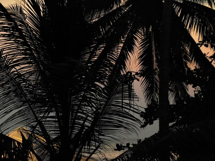 Sri Lanka Beauty In Nature Close-up Growth Leaf Low Angle View Nature Night No People Outdoors Palm Tree Sky Tree