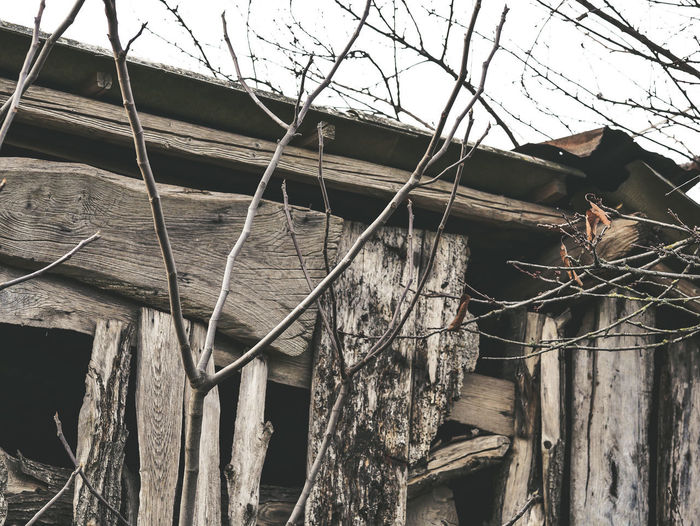 Architecture Tree Built Structure No People Wood - Material Building Exterior Day Building Nature House Plant Damaged Outdoors Low Angle View Branch Bare Tree Abandoned Roof Sky Old Deterioration Ruined