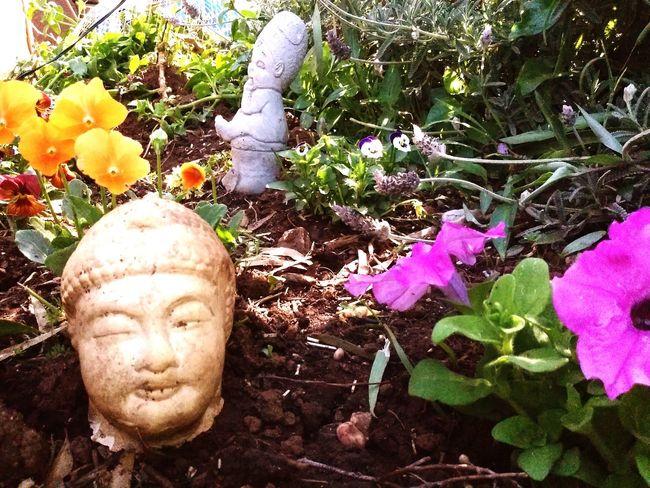 in the garden. Taking Photos Flowers