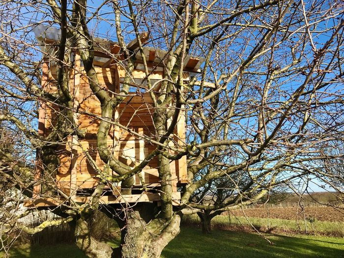 Tree house Childhood House Tree House Tree House♥ Tree Bare Tree Branch Day No People Outdoors