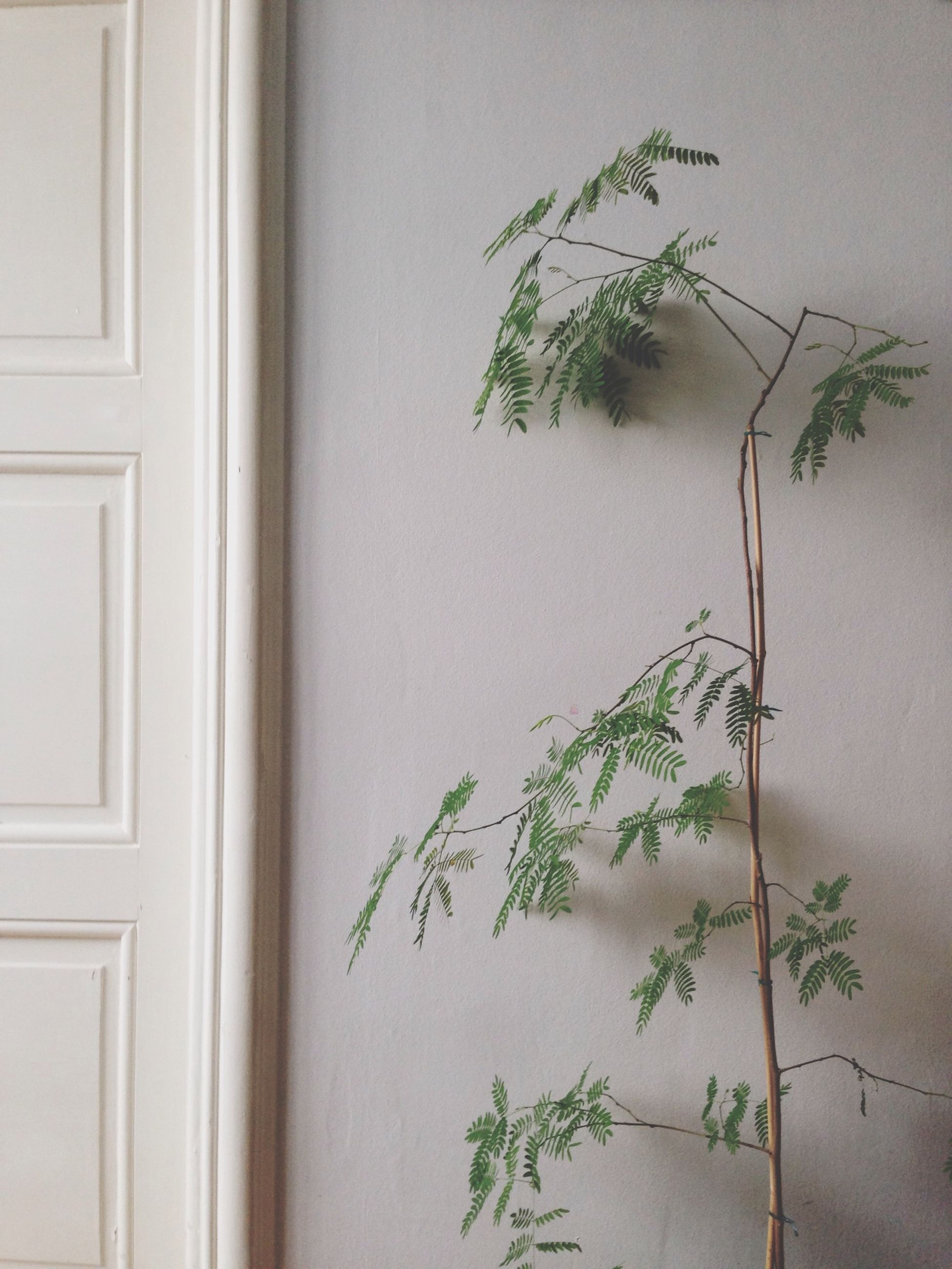 wall - building feature, wall, plant, built structure, growth, architecture, indoors, potted plant, leaf, close-up, green color, house, door, no people, window, building exterior, green, day, home interior, closed