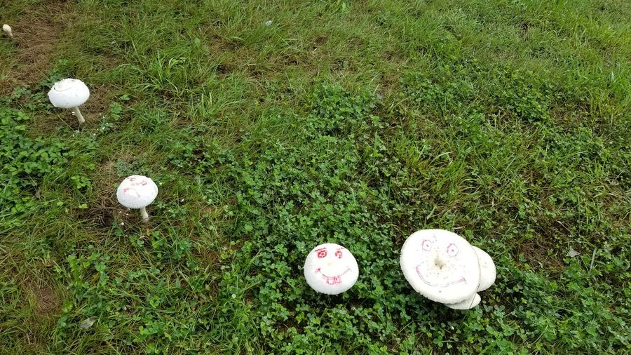 Right after sunrise... Beauty In Nature Do Not Eat Backyard Photography Backyard Garden Mushrooms Family Sand Ball High Angle View Grass Green Color Blooming Growing Toadstool Fungus