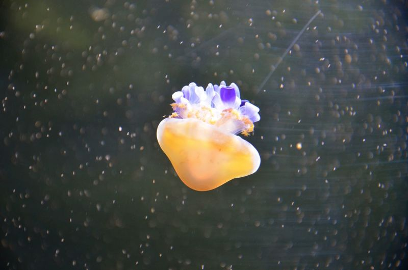 Close-Up Of Jellyfish In Water