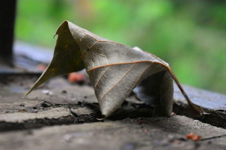Dead fallen leaf propped