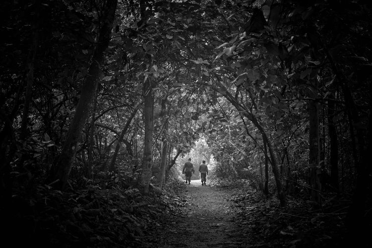 Walking in the Woods Moving Forward  Black & White Blackandwhite Two Men Tree Plant Forest Land Growth Nature Tranquility Beauty In Nature WoodLand The Way Forward Outdoors Direction