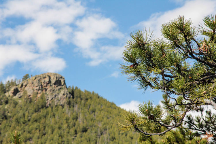 Blue Sky Check This Out Colorado Day Growth In The Mountains My Favorite Photo Nature New Work No People Outdoors Peaceful Plant Relaxation Scenery Sky Tree Vacation Views Vegetation