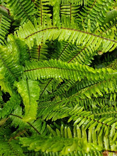 High angle view of fern leaves on tree