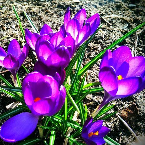 No Filter, No Edit, Just Photography Spring Has Arrived Zandvoort Beach TubishPhotoNL