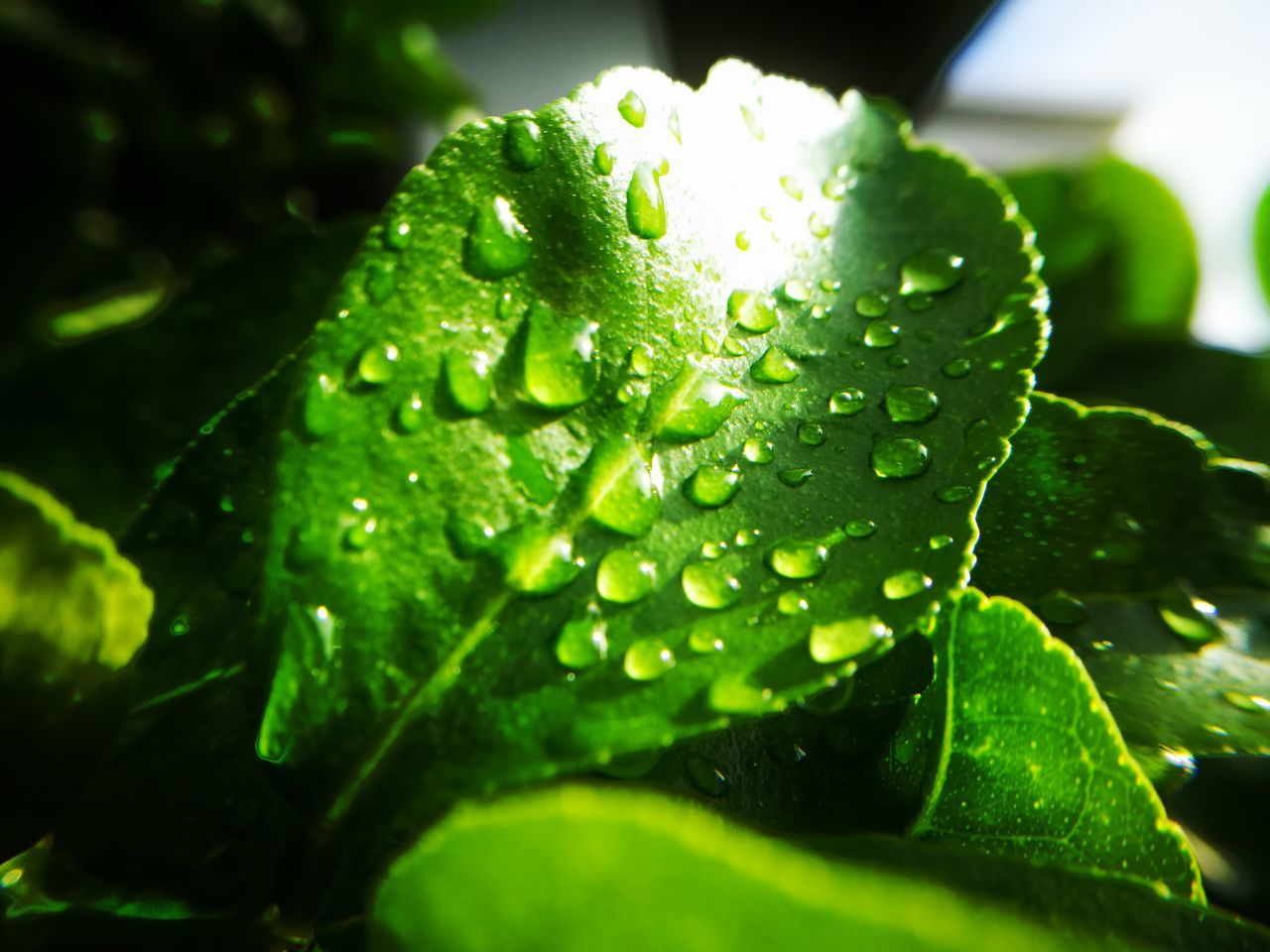 drop, green color, water, leaf, wet, nature, close-up, freshness, no people, growth, raindrop, beauty in nature, day, fragility, plant, outdoors