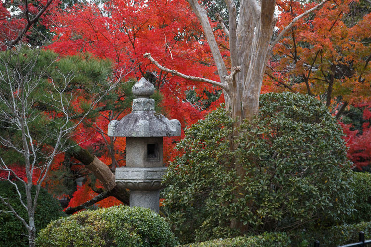 Tree Plant Growth Autumn Nature No People Architecture Day Change Built Structure Red Green Color Place Of Worship Orange Color Forest Beauty In Nature Spirituality Religion Outdoors Tranquility Autumn Collection