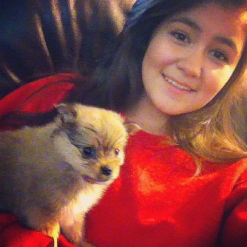 Coming home to this>>> ?? NewPuppy Socutee Adorable Tiny pomeranian 11weeks allieverwanted dreamsdocometrue thankthelord hallelujahthankyajesus