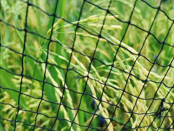 Full frame shot of leaf on field