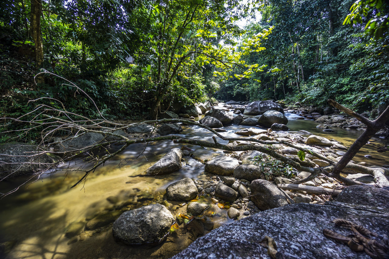 VIEW OF STREAM IN FOREST