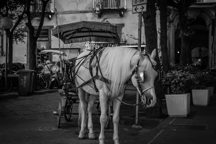 Horse cart on street in city