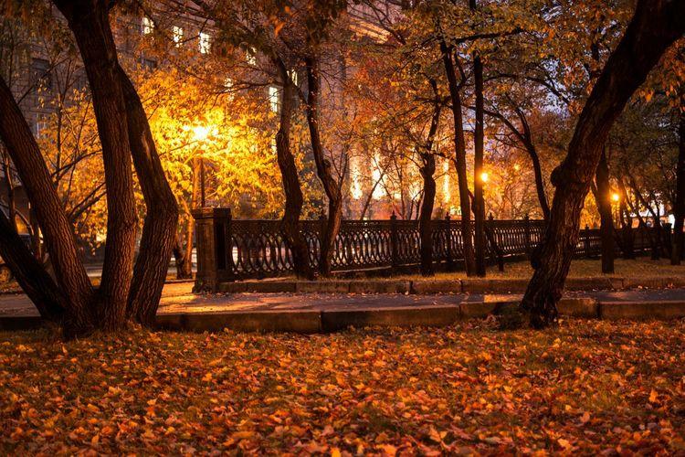 Городские скверики. осень Autumn Street Night Lights