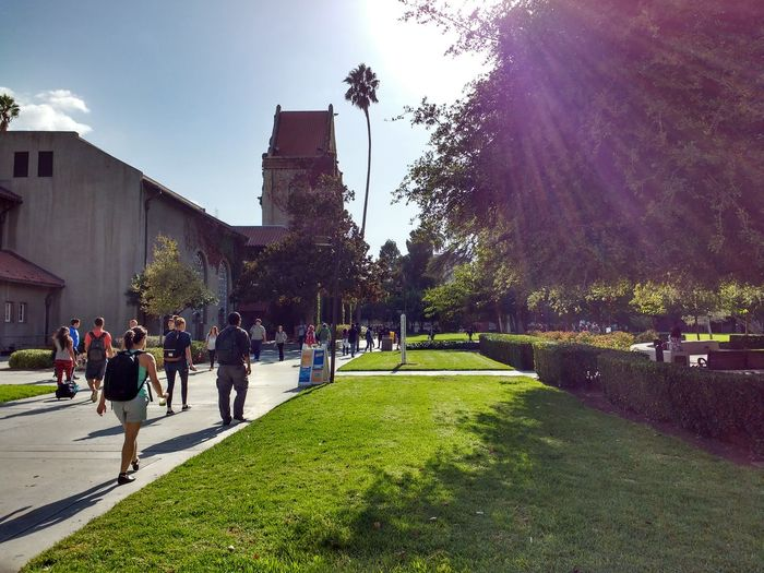 Architecture Campus Day Grass San Jose California SJSU Sky Spring Sun Tree Walking