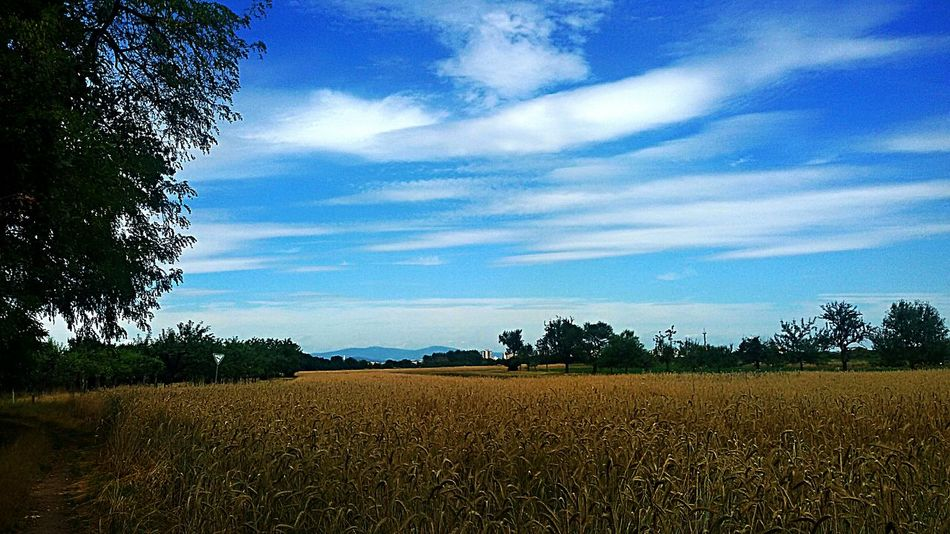 Sky Tranquil Scene Beauty In Nature Scenics Freshness Rural Scene Grass Eastern Purple Coneflower Black Background The Street Photographer - 2016 EyeEm Awards ,photoing A View ,Wat ,Wave, Wung(The Grand 43 Golden Moments EyeEm Nature Lover Flower Head Relaxing Building Exterior Relaxing Moments Water Beauty In Nature Sunbeam Built Structure Flower Backgrounds Animal Themes Nightlife