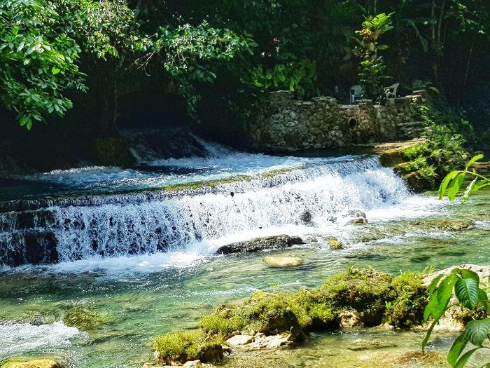 Falls, HydroPower Water Tree Forest Waterfall Grass