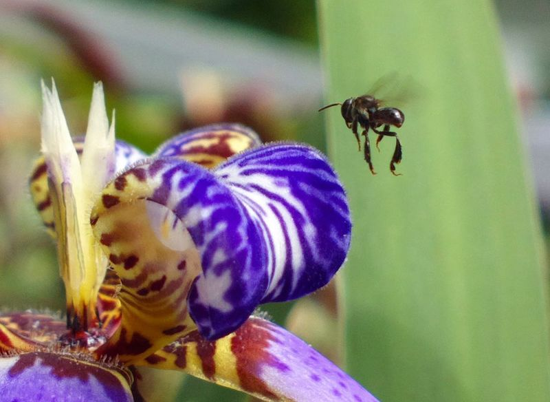 Insect Animal Themes Animals In The Wild One Animal Close-up Flower Animal Wildlife