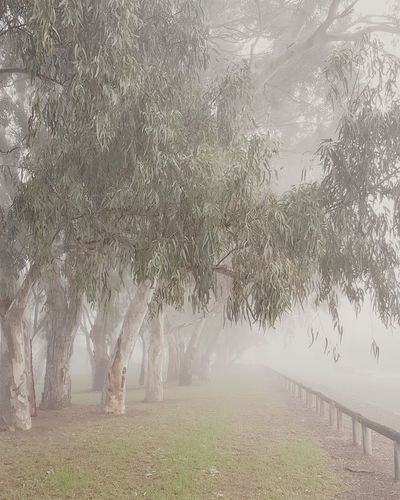 Winter Cold Tree Rural Scene Water Fog Agriculture Field Sky Grass Landscape Foggy Weather Mist Hazy  Weather Condition
