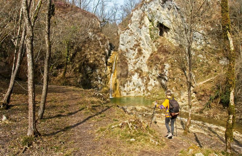 Rear view of man walking on rock in forest