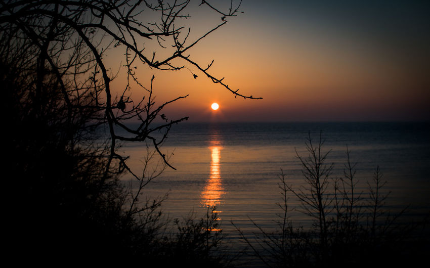 Sunset Sky Beauty In Nature Water Tree Sun No People Branch Plant Outdoors Orange Color Ventė Cape Marios Lithuania Nature Golden Hour Golden Sun Clear Sky Horizon Over Water Dark