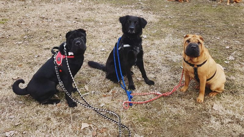 Sand Dog Pets Domestic Animals Animal Themes Beach Day