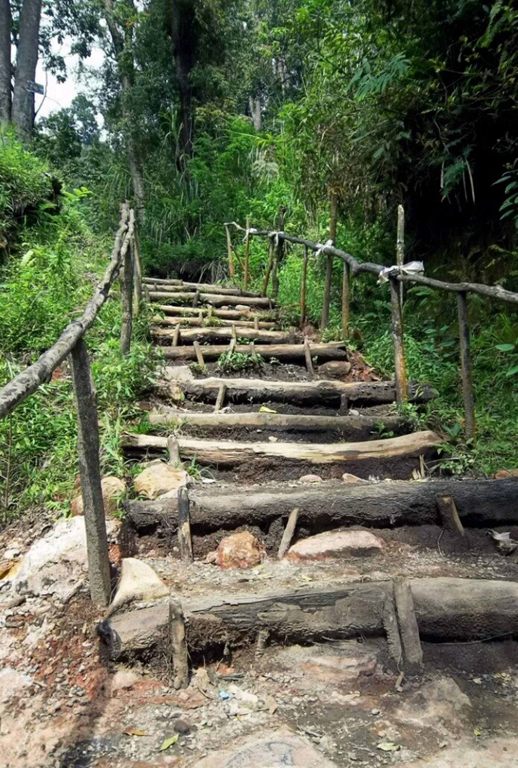 tree, steps, wood - material, forest, railing, built structure, steps and staircases, staircase, tranquility, growth, plant, footbridge, old, nature, the way forward, abandoned, wooden, wood, day, outdoors