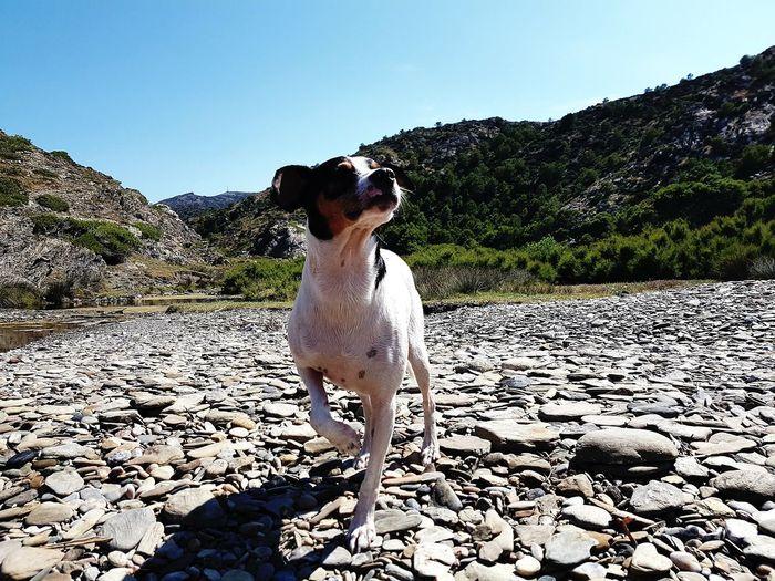 Nature DogLove Adventure Dog Life Dogslife Dogs Of EyeEm Dogs Nature Photography Dog Lover EyeEmNewHere