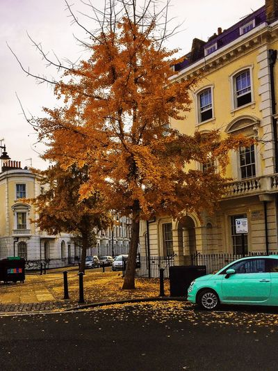 My Neighbourhood At Pilmico Victorian Architecture Autumn Trees And Nature Street Colors Photooftheday Picoftheday Building Exterior Architecture Built Structure Tree Car Street Transportation Outdoors Autumn City Mode Of Transport No People Change Land Vehicle Day Sky Road
