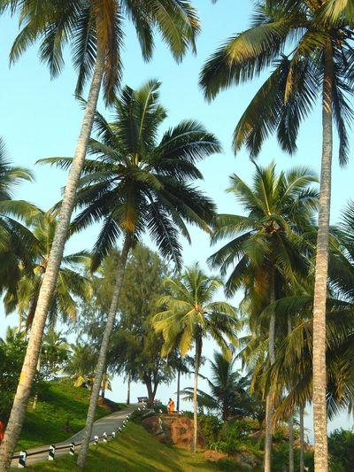 Nature Kerala