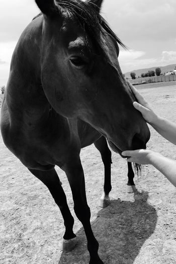 Mammal Real People Domestic Animals One Animal Human Hand One Person Day Outdoors Livestock Human Body Part Standing Nature Sky People EyeEm Animal Lover Blackandwhite Black & White Black And White