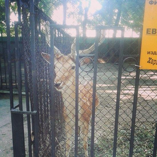 лань прекрасная грациозная зоопарк Харьков