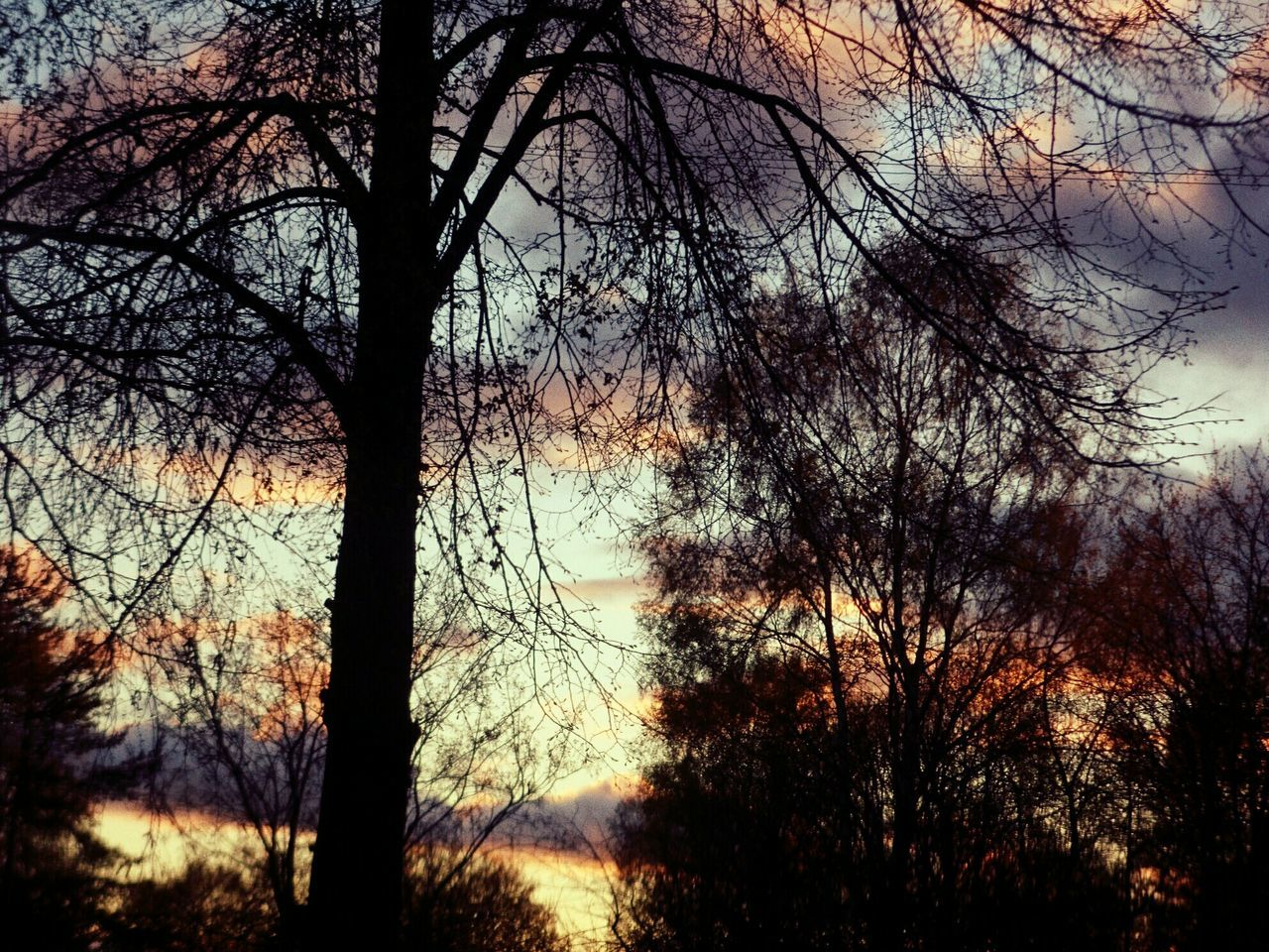 tree, bare tree, nature, tranquility, branch, forest, beauty in nature, tree trunk, tranquil scene, outdoors, no people, sky, silhouette, low angle view, scenics, day, landscape, bleak