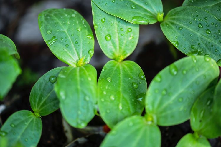 Growing plants Sapling Leaf Plant Part Drop Water Growth Wet Green Color Plant Close-up Beauty In Nature Nature No People Freshness Day Outdoors Rain Leaves RainDrop Clover High Angle View