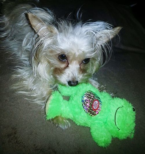 Lisa with green