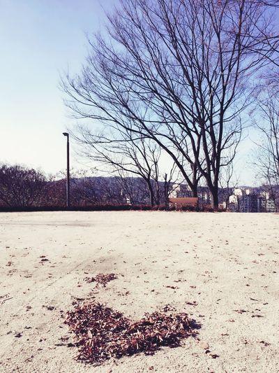 Love Tree And Sky Heart Leaves Winter Trees South Korea