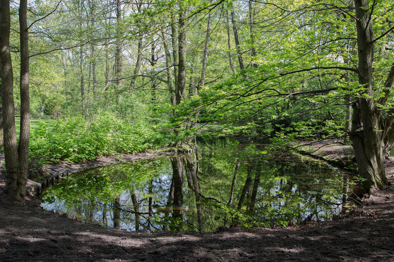 Walk through the Park Berlin Broadleaf Broadleaves Colour Green Lagoon Lake Lake View Mirror Mirror Picture Mirror Reflection Park Spring Spring In The City Springtime Sunshine Sunshine And Shadows Walk Through The Park Walk Through The Park