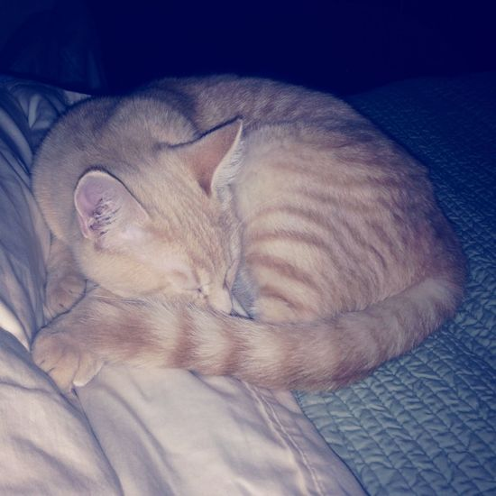Eddy our buff kitty. So pretty.
