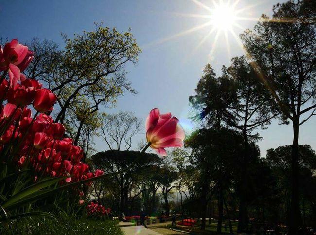 Lale oldum bu gün ben saldım kendimi toprağa. . Flowers Hello World Türkiye #istanbul #emirgan #emirgankorusu #sarıbeyaz #laleler #macroworld_tr #macro #canonphotographers #canon600d #noedit #editsiz #oneistanbul #istanbulunlaleleri #doğal #vs #nokta #. #tulips #flowers #tulip #fotografturkiye #naturel_turkey #istanbulday Street Photography Emirgan Korusu Turkeyphotooftheday Turkinstagram Hugging Tree Istanbuldayasam Eyem Best Shots Landscape Sunset_collection Eyeem Natur Lover Hugging A Tree Ctiy Street EyeEm Best Shots Emirgankorusu Türkiye #istanbul #emirgan #emirgankorusu #sarıbeyaz #laleler #macroworld_tr #macro #canonphotographers #canon600d #noedit #editsiz #oneistanbul #istanbulunlaleleri #doğal #vs #nokta #. #tulips #flowers #tulip #fotografturkiye #naturel_turkey #istanbulday Türkiye #istanbul #emirgan #emirgankorusu #sarıbeyaz #laleler #macroworld_tr #macro #canonphotographers #canon600d #noedit #editsiz #oneistanbul #istanbulunlaleleri #doğal #vs #nokta #. #tulips #flowers #tulip #fotografturkiye #naturel_turkey #istanbulday